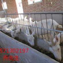 供应奶山羊羊舍建设、富平奶山羊供应商、富平县奶山羊交易中心批发