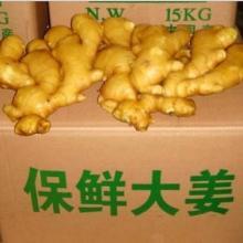 供应抚州生姜批发价格,抚州生姜供应商图片