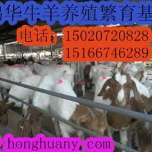 供应波尔山羊养殖羊舍标准化建设批发