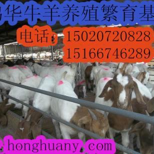 波尔山羊养殖羊舍标准化建设图片