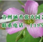 潍坊市性价比最高的绿化苗木首选青图片