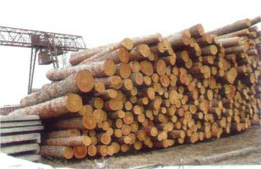 供应深圳原木木材进口代理图片