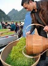 供应白茶价格