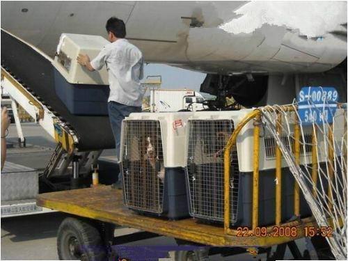 供应特价国际空运