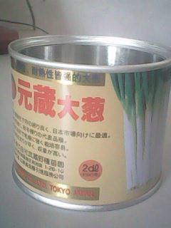 供应批发元藏大葱葱种子