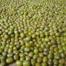 供应绿豆优质绿豆绿豆批发东北绿豆粮油 干货 干制水产品批发