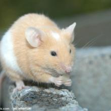 供应潍坊灭鼠公司