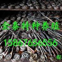 批发蛇干,联系电话15867656556 图片 效果图