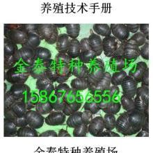 供应土元养殖技术手册,联系电话15867656556批发