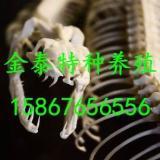 批发蛇骨,联系电话15867656556