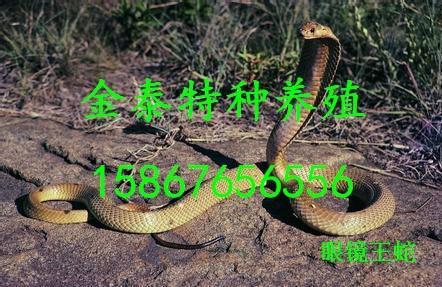 批发,联系电话15867656556销售