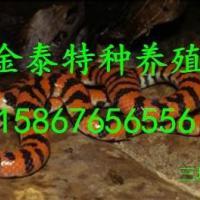 批发三环蛇,电话15867656556