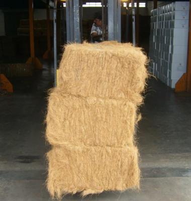 椰棕丝供应商图片/椰棕丝供应商样板图 (2)