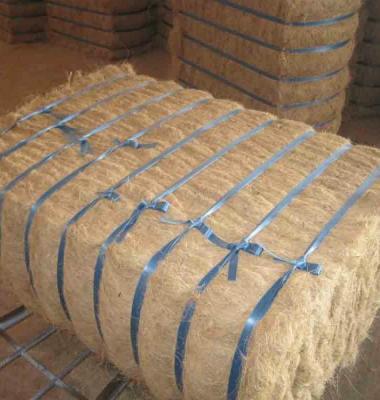 椰棕丝供应商图片/椰棕丝供应商样板图 (1)