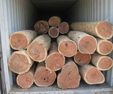 供应 欧洲木材进口清关代理 图片