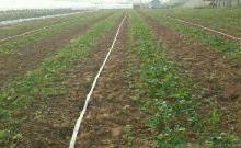 供应优质微喷带喷灌带