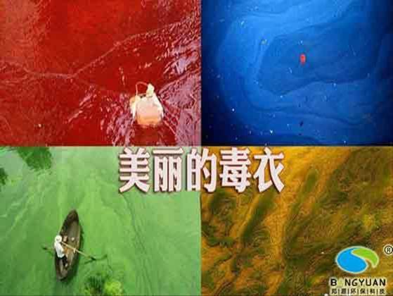 水污染的危害 水污染的危害及防治 水污染的危害ppt图片