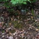 供应野生榛蘑,黑龙江东北野生榛蘑大量批发,东北野生榛蘑哪里有