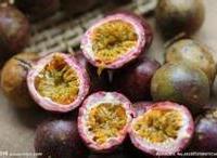 防城港百香果种植,桂林百香果种植,百色百香果种植 图片|效果图