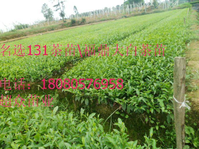 供应梅州茶叶供货商