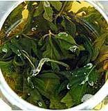 植物原药材-批发绞股蓝(产地直销)2013年新货上市 颜色翠绿
