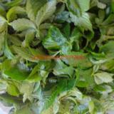 供应优质野生富硒绞股蓝茶的功效与作用