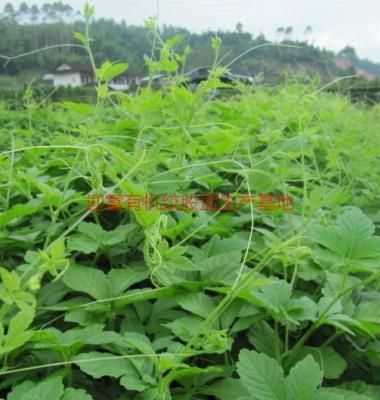 植物原药材图片/植物原药材样板图 (2)