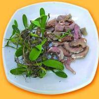 供应优质野生石橄榄厂家供应,优质石橄榄供应厂家,优质野生石橄榄直销