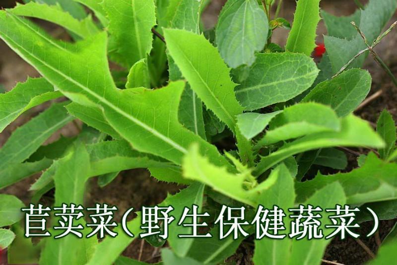 苣荬菜可以施用有机肥吗?