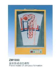 供应康谊牌 ZM1008 尿的形成动态模型