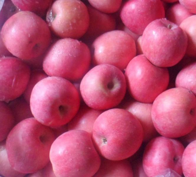 山东蓬莱产区大量冷库出口货柜苹果销售