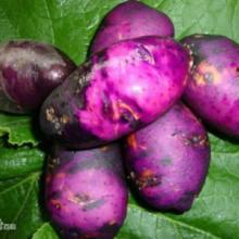 供应紫土地豆
