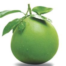 供应荆州柚子批发价格