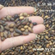 四川金丝楠种子图片