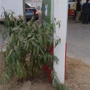 供应广西宁明县加油站进出口灯箱