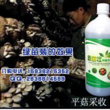 供应绿苗壮在食用菌上的使用技术