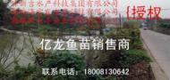 亿龙罗非鱼苗四川销售商
